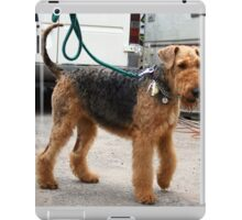 Well-trained Airedale Terrier