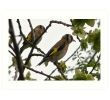 A Pair of Goldfinches Art Print