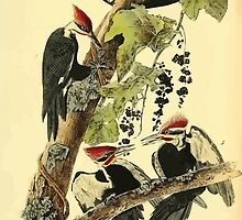 James Audubon Vector Rebuild - The Birds of America - From Drawings Made in the United States and Their Territories V 1-7 1840 - Pileated Woodpecker by wetdryvac