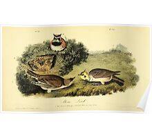 James Audubon Vector Rebuild - The Birds of America - From Drawings Made in the United States and Their Territories V 1-7 1840 - Shore Lark Poster