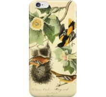 James Audubon Vector Rebuild - The Birds of America - From Drawings Made in the United States and Their Territories V 1-7 1840 - Baltimore Oriole or Hang Nest iPhone Case/Skin