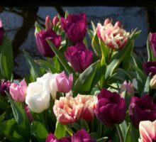 Tulips at Keukenhof Sticker