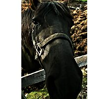 Booooooo I Am A Black Horse And You ?? Photographic Print