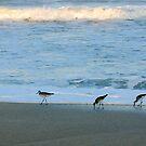Birds  by Lisa DeLong