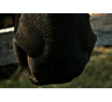 Big Nose  Photographic Print