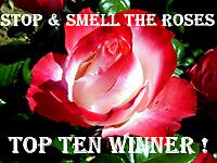 Stop & Smell the Roses - Winners Banner proposal by sstarlightss