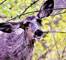 Deer John by kimberpix