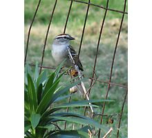 Little Bird On The Fence Photographic Print
