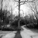 Right of the Tree by David Lamb