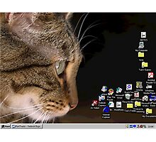 cat n mouse Photographic Print