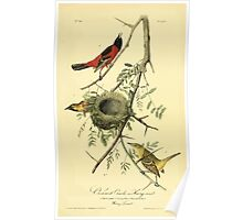 James Audubon Vector Rebuild - The Birds of America - From Drawings Made in the United States and Their Territories V 1-7 1840 - Orchard Oriole or Hang Nest Poster