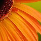 Orange corner by CapturedbyC