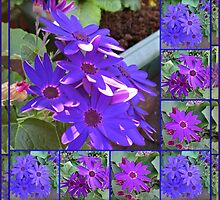 Cinerarias Dreaming -  Floral Collage in Purple and Blue by BlueMoonRose