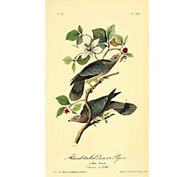 James Audubon Vector Rebuild - The Birds of America - From Drawings Made in the United States and Their Territories V 1-7 1840 - Band Tailed Plover or Pigeon Photographic Print