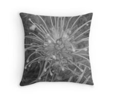Graceful Grevillea Throw Pillow