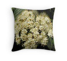 'Leatherleaf Viburnum Flower Cluster' Throw Pillow