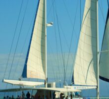 Sailing at Port Douglas Queensland Australia  Sticker