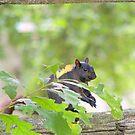 Wood Rat............... by Larry Llewellyn
