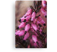 Spring in macro Canvas Print