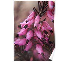 Spring in macro Poster