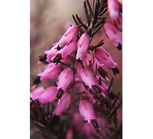 Spring in macro Photographic Print