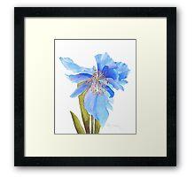 Blue Poppy Extraordinaire Framed Print