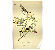 James Audubon Vector Rebuild - The Birds of America - From Drawings Made in the United States and Their Territories V 1-7 1840 - Bullock's Troopial Poster