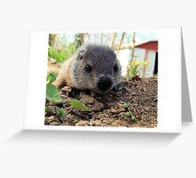 wandering groundhog cub Greeting Card