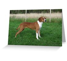 Fluffy Hungarian Wire-Haired Vizsla Greeting Card