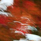 Autumn by CapturedbyC