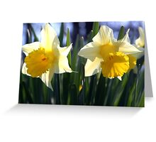 Two daffodils Greeting Card