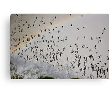 Rainbow Swarm Canvas Print