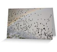 Rainbow Swarm Greeting Card