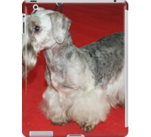 Cool Cesky Terrier