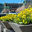 """City Life - """"Spring Flowers"""" by Denis Molodkin"""