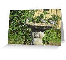 Wild Birds in for a Drink Greeting Card