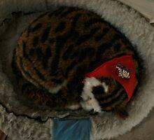 Sleeping Tabby Cat by terrebo