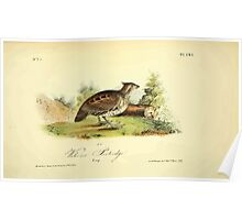 James Audubon Vector Rebuild - The Birds of America - From Drawings Made in the United States and Their Territories V 1-7 1840 - Welcome Partridge Poster