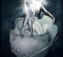 Rose fairy by Lilla Márton