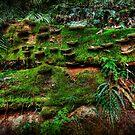 Fungus Amongus by Matthew Jones