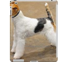Funky Lakeland Terrier