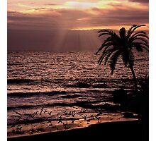 Sunset Flight Photographic Print
