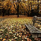 Autumn at Odiorne by RonSparks