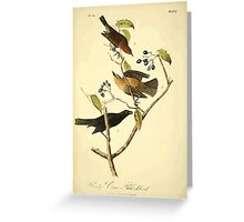 James Audubon Vector Rebuild - The Birds of America - From Drawings Made in the United States and Their Territories V 1-7 1840 - Rusty Crow Blackbird Greeting Card