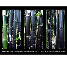 Java Black Photographic Print