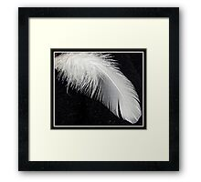 Soft as a feather Framed Print