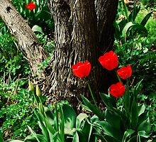 Tulips Hiding in the Garden by J. D. Adsit