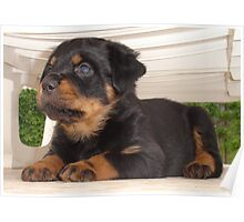 The Rottweiler Sphinx Poster