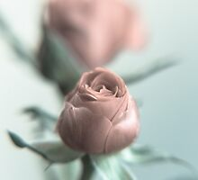 A Pink Rose for your Sweetheart... by pASob-dESIGN