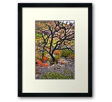 Lone Tree in the Flower Fields Framed Print